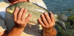 pescar de caras