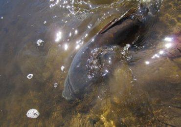 Esecul sau succesul pescuitului pe canicula